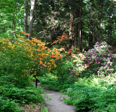 view of flowers blooming with trees behind at Garden in the Woods.